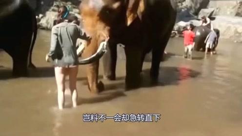 女子去泰国旅游摸大象,结果被顶飞,隔着屏都觉得疼!