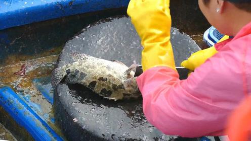 大妈宰杀石斑鱼,几下功夫就处理干净了!