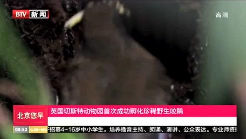 英国切斯特动物园首次成功孵化珍稀野生咬鹃