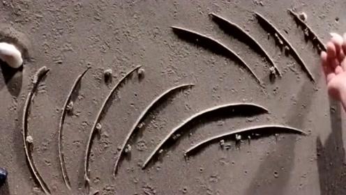 手艺人就是厉害,能在海滩上画出精美的线条