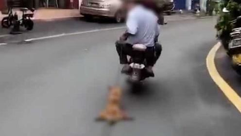 两男子开摩托拖行小狗引街坊愤怒:很残忍
