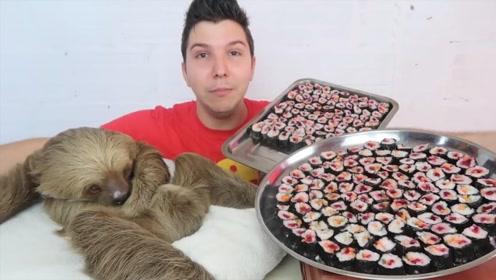 小伙和树懒挑战200个寿司,吃到树懒睡着了,太可爱了
