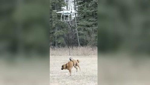狗子:没想到啊 老子有生之年,还可以在天上飞
