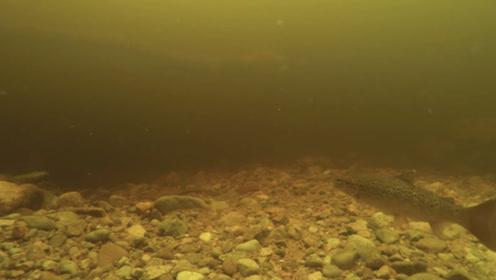 尼斯湖拍到巨型鳗鱼视频:或佐证本月初专家DNA研究发现