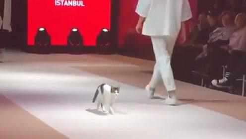 小猫闯入时装展,终于看不下去了,亲自示范走了一遍正宗猫步