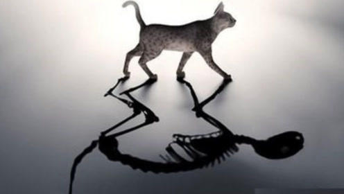 宇宙中真的存在平行世界吗?薛定谔的猫早已给出了答案
