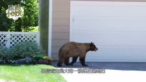 男子野外碰到黑熊,不逃跑还和黑熊对峙,镜头拍下全过程
