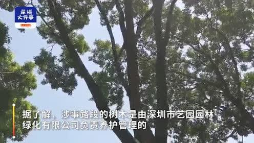 7米长树枝从10多米高空折断坠落,深圳一男子被砸头部流血不止
