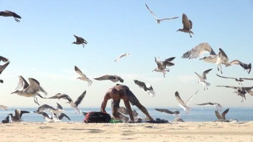 同伴在海边晒太阳,小伙把饲料撒下去,下一秒场面失控