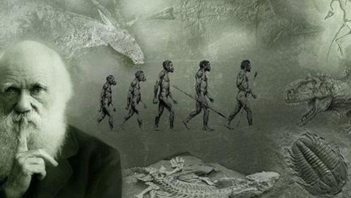 进化论为何总被质疑?疑被学术界神化,它无法解释进化提速问题