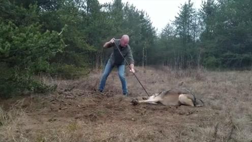 老外解救被困野狼,野狼全程非常配合,镜头拍下全过程