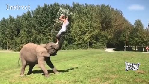 去大象鼻子上玩后空翻,你可真是胆大
