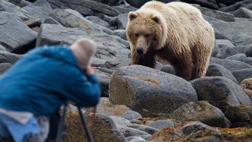 3个熊口逃生的惊险瞬间,第二个最刺激,看完很佩服