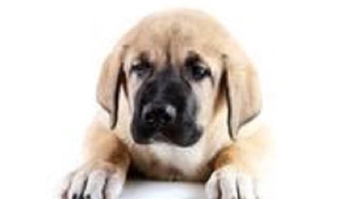 这几月出生的生肖狗,天生好命,锦衣玉食,富贵多金