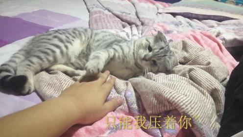 小猫不让主人压着爪子,闹起来超凶的,主人:你真是奶凶奶凶啊
