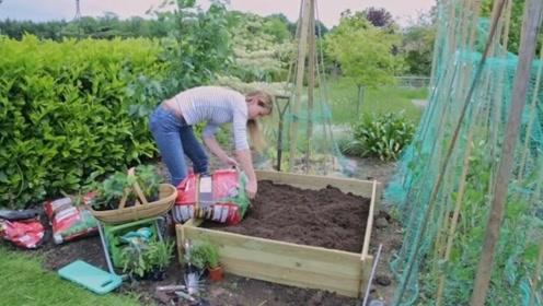 农作物才是蹦迪大户!喜欢忽明忽暗,还可以茁壮成长!
