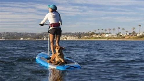 不用起浪也能玩的冲浪板,普通人也会,和骑自行车一样简单