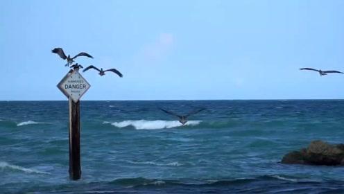 这鱼群,连海鸟都感觉不知所措,看傻眼了