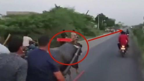 男子坐上牛车后已经玩嗨了,结果牛烦了,一车人遭殃了!