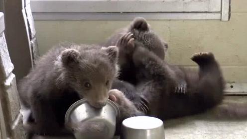 男子年轻时救助三只棕熊,再相见已白发苍苍,棕熊的反应令人落泪
