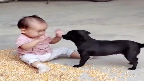 果然动物和宝宝能玩在一起,接下来一幕,这画面太温馨了!