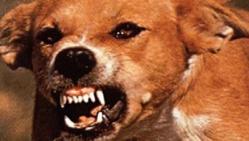 狂犬病死亡率100%,被狗咬了一定要打针吗?专家告诉你怎么做