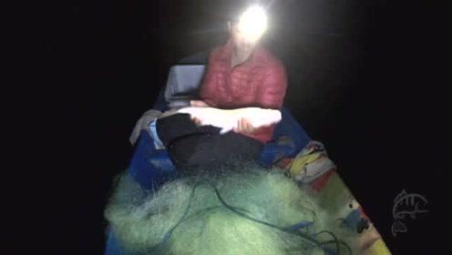 一个星期了没下网,今天把大网全部下沉网,收到清一色的这鱼