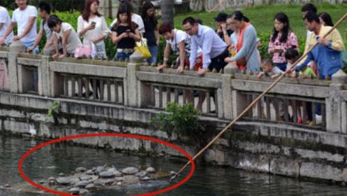 众人放生乌龟,几天后,女子看到放生池一幕:早知道不放了