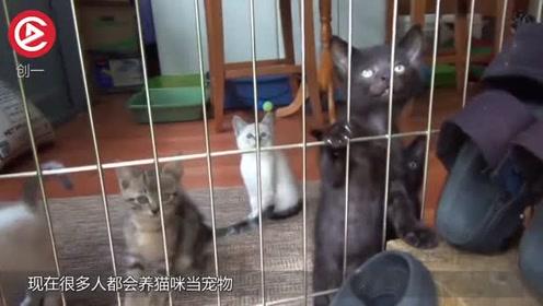 为什么猫不怕鱼刺?把画面放慢100倍,发现它的独门秘籍!