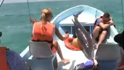 海豚在游客面前炫技,没想到得瑟过了头,一头栽进船舱里!