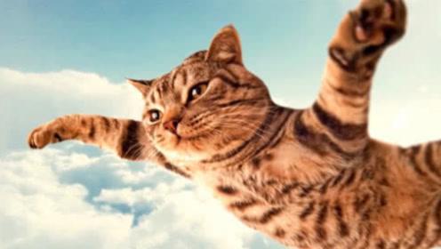 猫有9条命?科学家将150只猫从高空扔下,答案令人不可思议!
