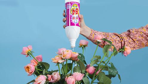 买的花没几天就蔫了,太浪费了!教你一个养花秘籍,延长5倍寿命