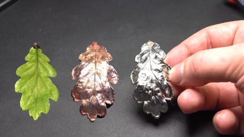 利用电镀,把易腐烂的树叶,制作成永恒闪亮的首饰