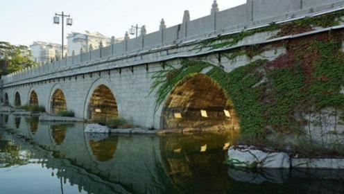 为何国家要在高架桥上,种满密密麻麻爬山虎?看完才知用处这么大