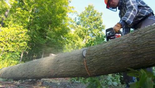 自然界天生的伐木高手,身上自带砍树利器,只可惜脑子有点不好使