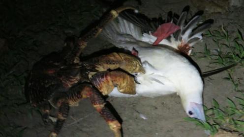 一只海鸥在地上不停挣扎,听到动静男子走进一看,可把他乐坏了!