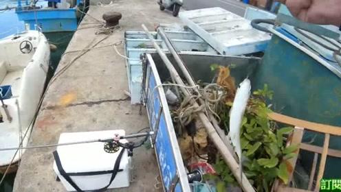 前打钓鱼,虾竿改造,手感很好,狂拉虱目鱼