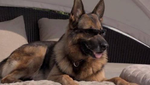 世界上最土豪的狗狗 坐拥25亿财产 网友表示羡慕不来