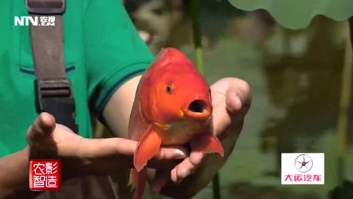 这个鱼它竟然站起来了!