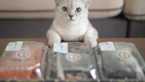 猫咪塔可喊妈妈去买鱼,结果……