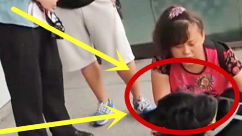 地铁站不许狗狗进入,导盲犬被连轰11次,伤心的趴在地上哭!
