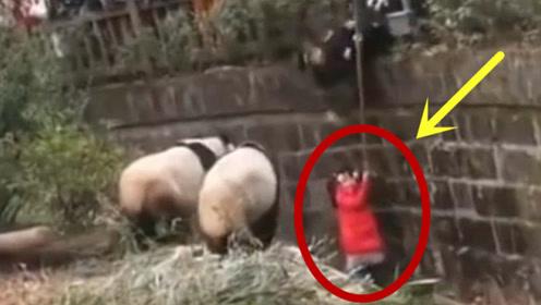 三岁女孩不慎掉进熊猫窝,妈妈惊慌不已,下一秒却让人意外!