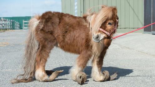 小马驹被关7年主人不理不睬,解救出来时,马蹄都变形了