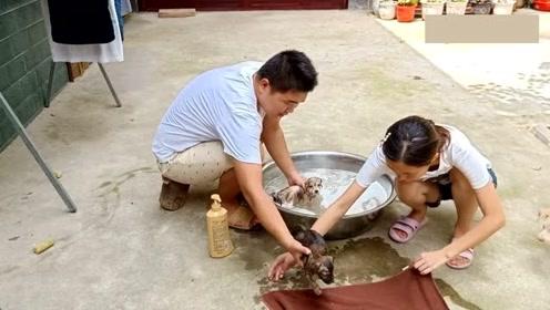 夫妻俩给狗狗洗澡,狗狗很调皮,水都溅到主人嘴里了