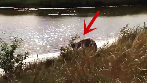 女子河边散步,看到一个怪物正在喝水,走近一看顿时头皮发麻!