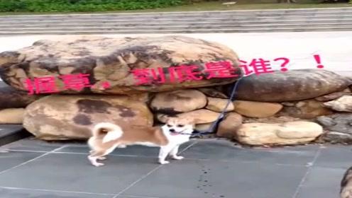 狗:哪来的刁民想害朕,老子轻饶不了你!网友:你自己
