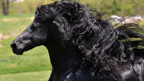 女子救下被遗弃的小黑马,10年来越长越不对劲,有人花200万购买都不卖