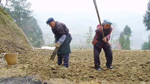 有人说农民种地是天底下最脏最累的职业,你认为呢?