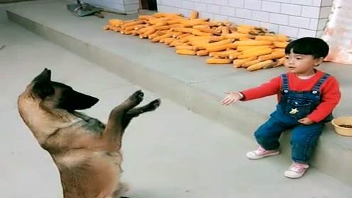 农村小孩真聪明,这么小就知道训练马犬了,长得不得了!
