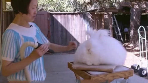 老奶奶捡回一只兔子,养3年没舍得吃,孙女回家后瞬间愣住了!
